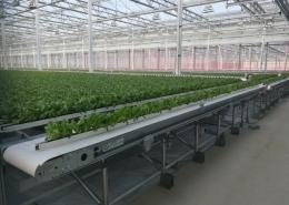 Robots net meer weg te denken uit de agro food sector